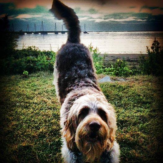8.9.14 - Gander the Service Dog Receives Hero Award2