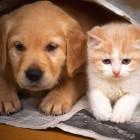 Massachusetts Legislature Stiffens Penalties for Animal Cruelty