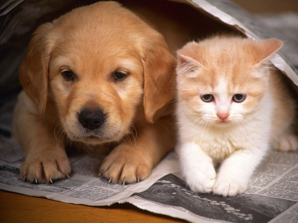 dog-and-cat
