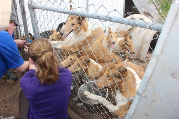 """Save me next!"" - HCR The dogs greet their rescuers."