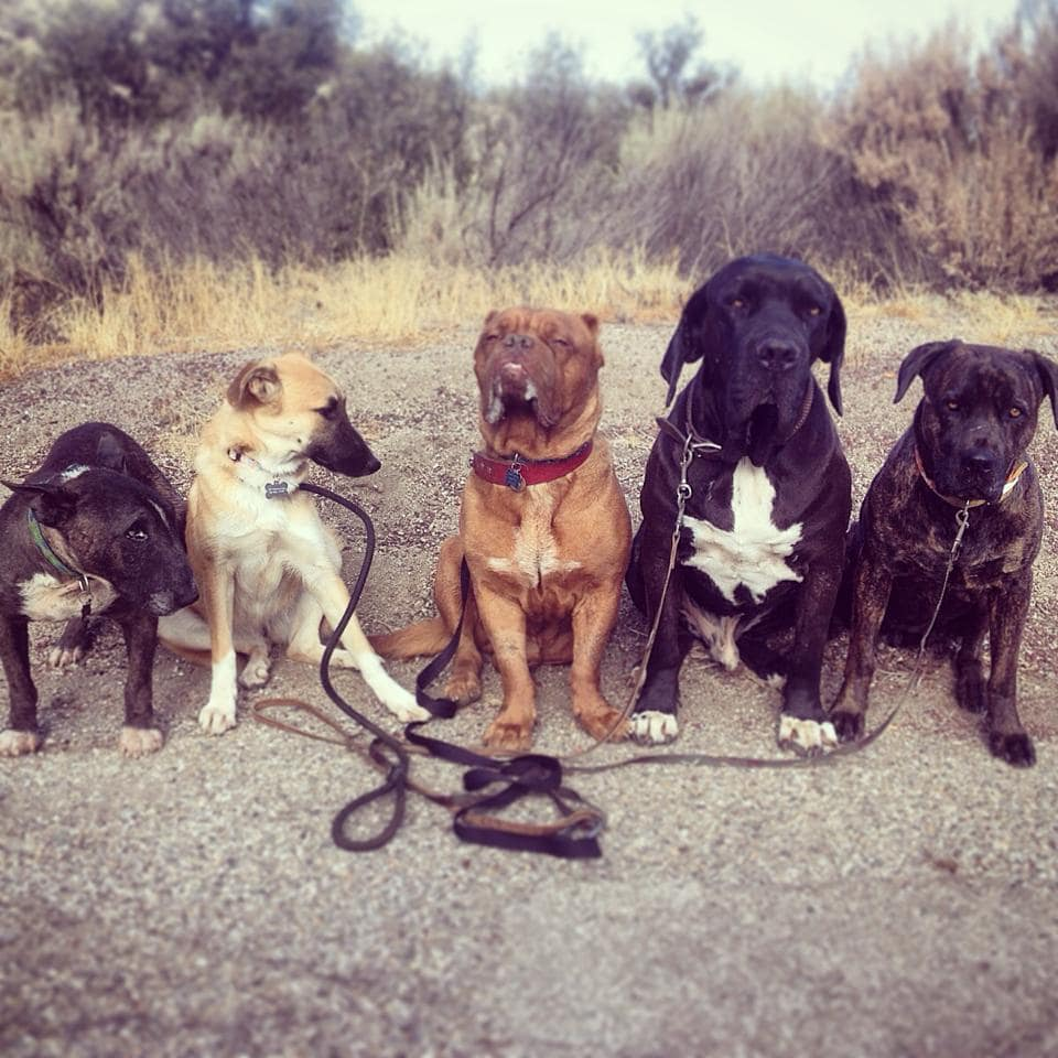 Hooch poses with some of his Marley's Mutts pals in a recent photo