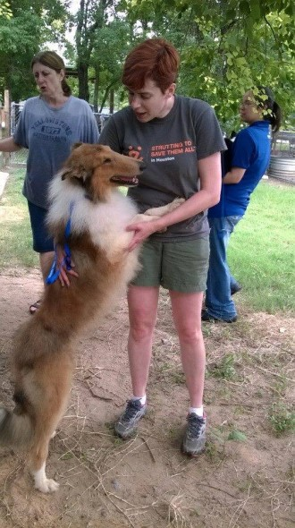 """These collies are starved for love and our wonderful volunteers are happy to oblige."" - HCR"