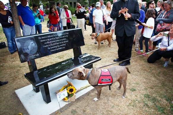 Puppy Doe Memorial Bench is Dedicated in Quincy, MA