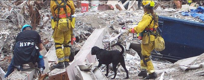Honoring the Search and Rescue Dogs of 9/11