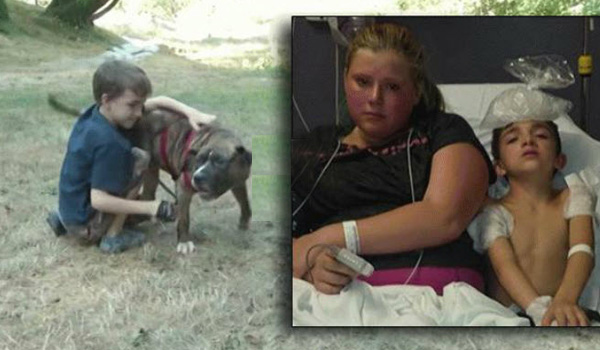 Pit Bull Saves Eight-Year-Old Boy from Bees