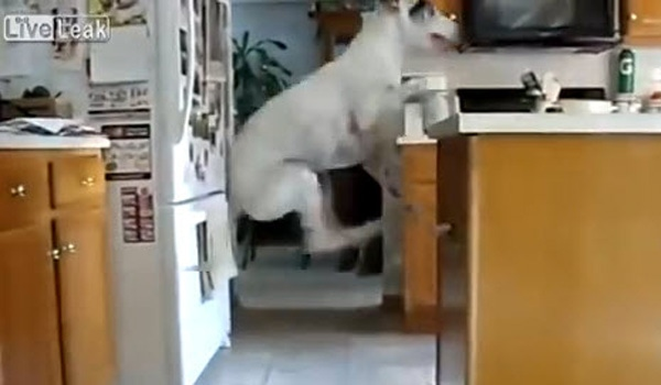 Dog Can't Stop Jumping when It's Dinner Time
