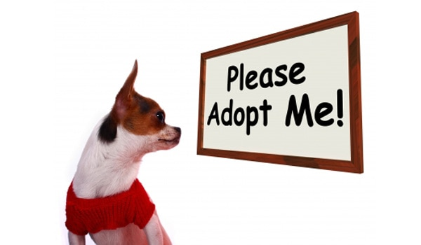 Shelters Waive Adoption Fees and Save Many Pets' Lives