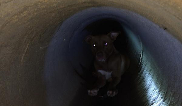 Dog Gets Rescued from Highway Drainage Pipe