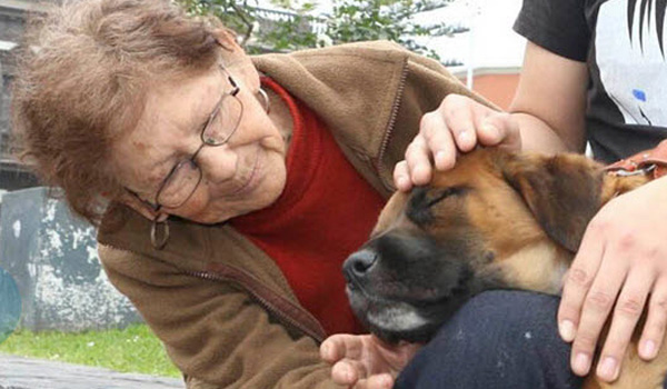 Live News Report Helps Woman Reunite with Lost Dog