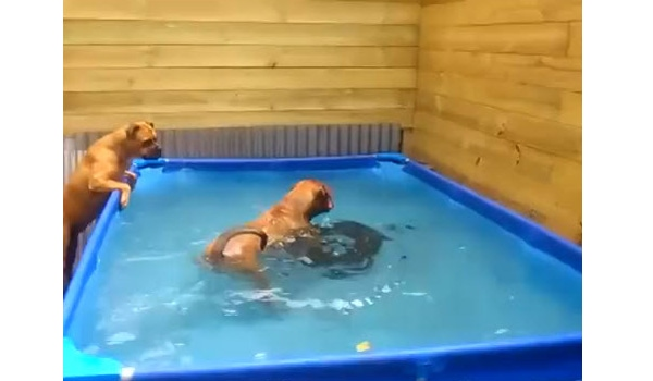 Doggy Teamwork