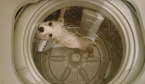 Man Uses Washing Machine to Bathe Dog, Now He's a Wanted Man