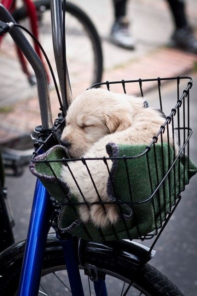 Here Are 15 Dogs Sleeping in Unusual Places or Positions