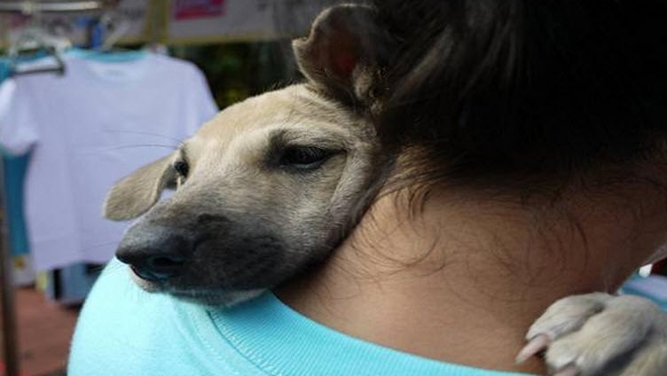 Photos: Ten Dogs Giving the Best Hugs