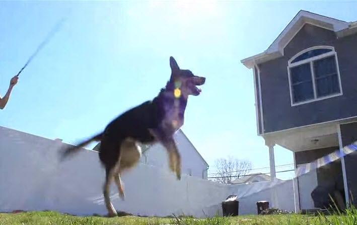 Dog Masters Rope Jumping