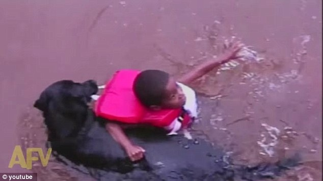 Trained Rescue Dog Saves Kid from Drowning, but the Kid Didn't Need Saving