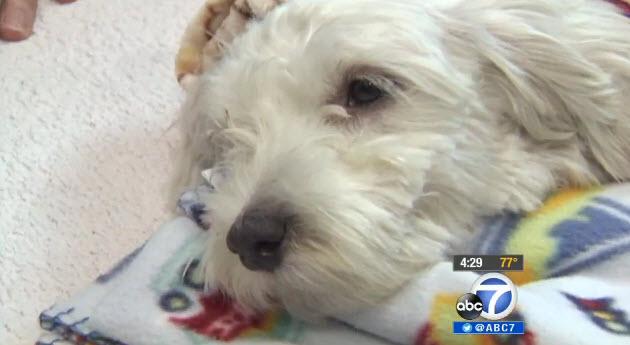 Dog Survives Getting Run Over by Stolen Van