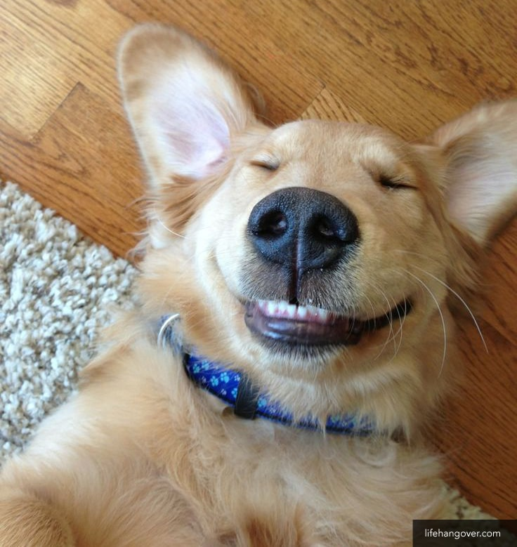 Photos: Ten Dogs Showing Their Best Smiles