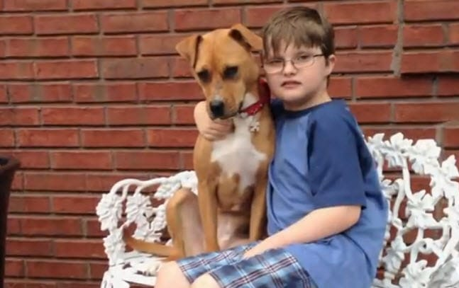 Abused Pit bull Cheats Death, Meets Autistic Boy and Then the Unexpected Happens