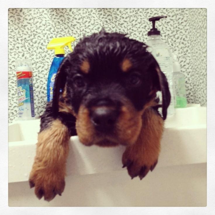 Photos: Cute Dogs Taking Baths