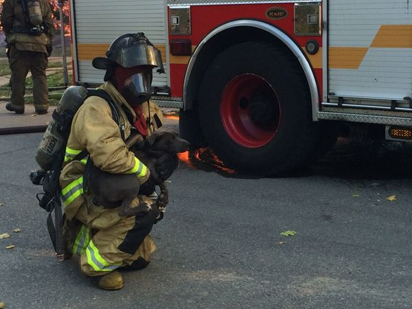 Amazing! Firefighter Saves Dog from Home Engulfed in Flames
