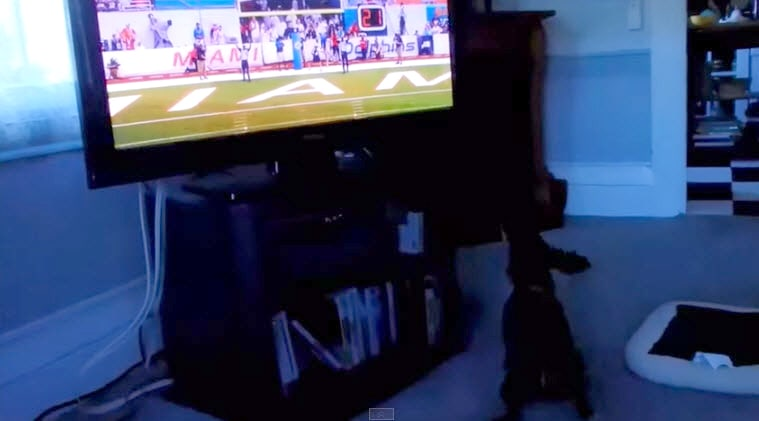 Dog Is Excited Football Season Is Back