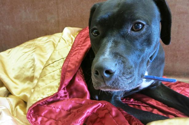 Agoraphobic Dog Needs Forever Home
