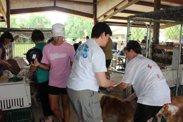 Volunteers processing the rescued dogs.