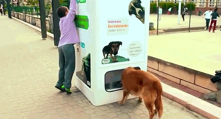 Recycling Program Helps Feed Istanbul's Street Dogs
