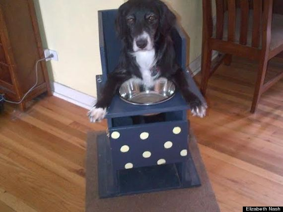 Special Needs Rescue Dog Eats from High Chair