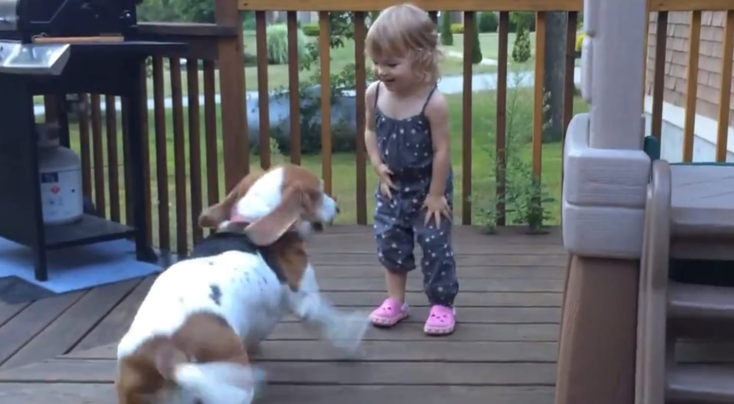 Rescue Dog and Toddler Have the BEST Time Together!