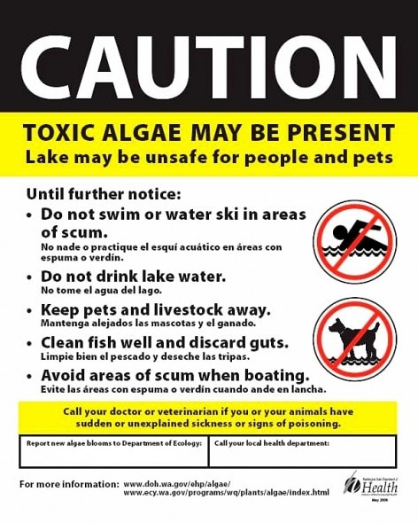 9.12.14 - Blue-Green Algae Causing Dog Deaths7