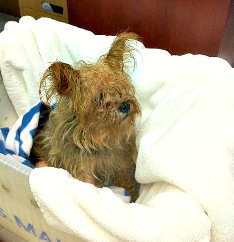 9.12.14 - Dog Found in Tupperware1