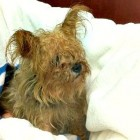 Dog Abandoned in Tupperware Container Found Alive