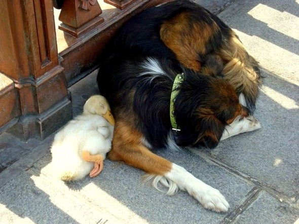 These two have been spotted napping all over Paris together.