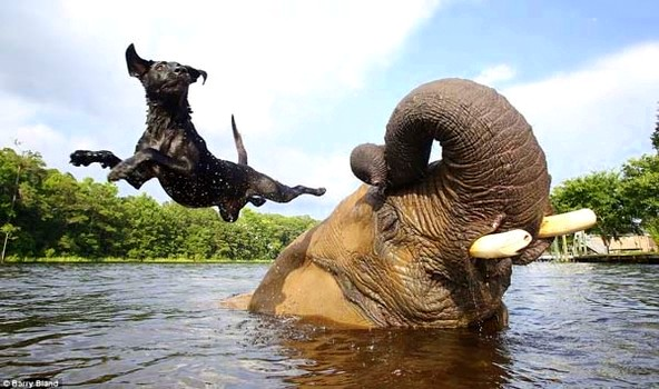 15 Dogs Whose Best Friends Are Wild Animals