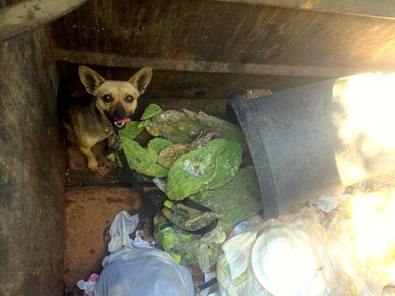 Dog Left in Dumpster in California is Rescued