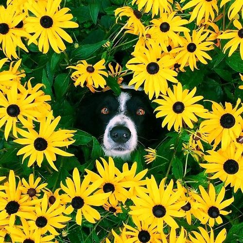 Πού κρύβεται ο σκύλος;