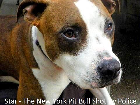 9.14.14 - Nebraska Man Saves Dog Shot by NYPD1