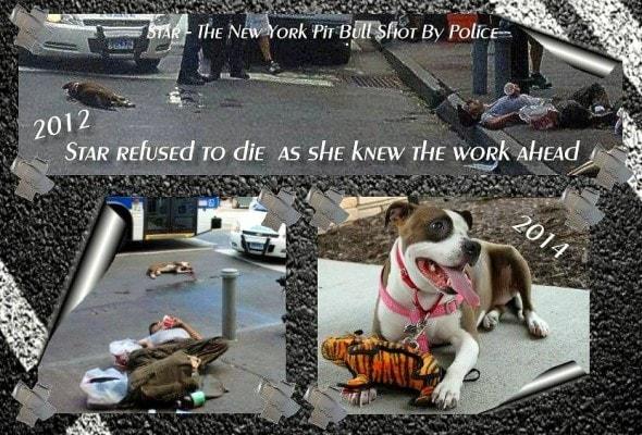 9.14.14 - Nebraska Man Saves Dog Shot by NYPD3