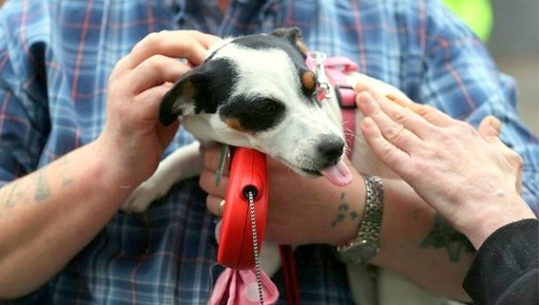 9.14.14 - Woman Reunited with Dog Believed Dead in Massive Arson Fire10