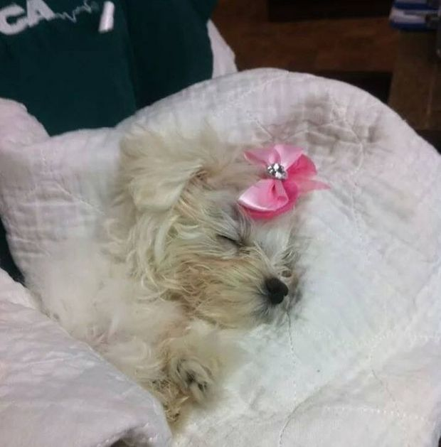 Dog Abandoned in Plastic Shopping Bag on Staten Island is Rescued