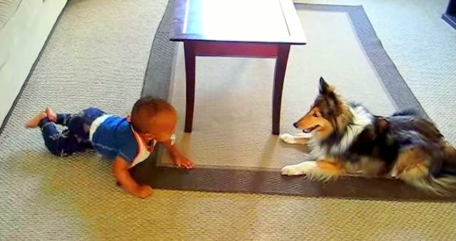 Baby Thinks Dog Is a Riot