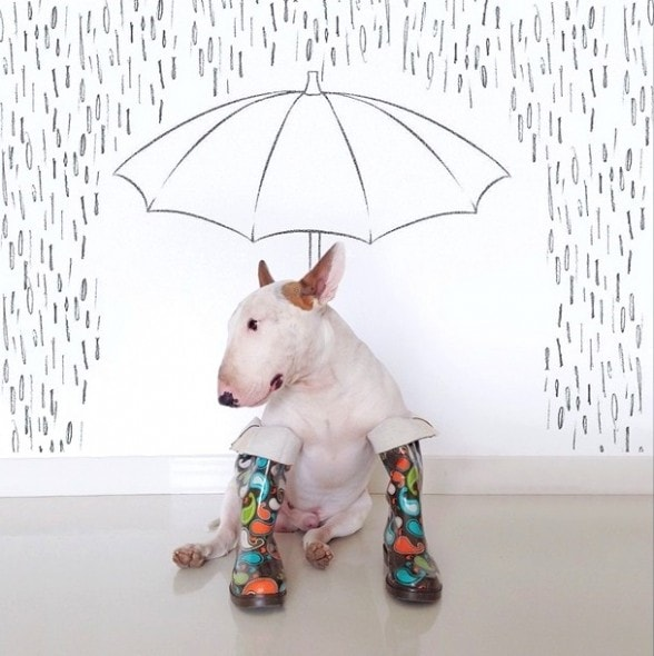 9.17.14 - Jimmy Choo, Wonder Dog13