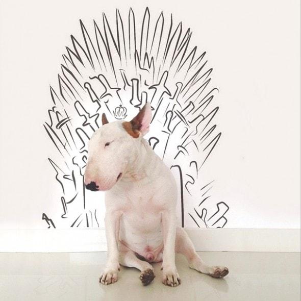 9.17.14 - Jimmy Choo, Wonder Dog9