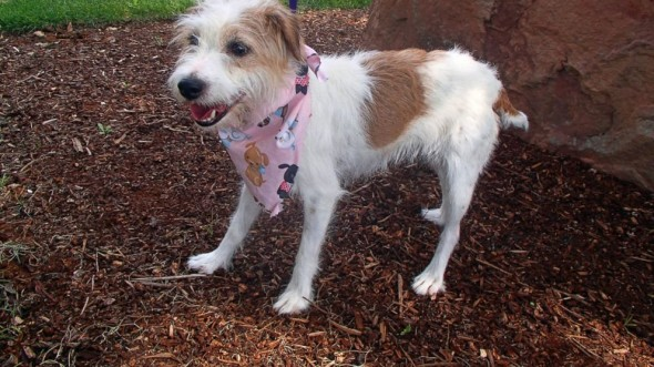 9.18.14 - Missing Dog from Pennsylvania Located in Oregon
