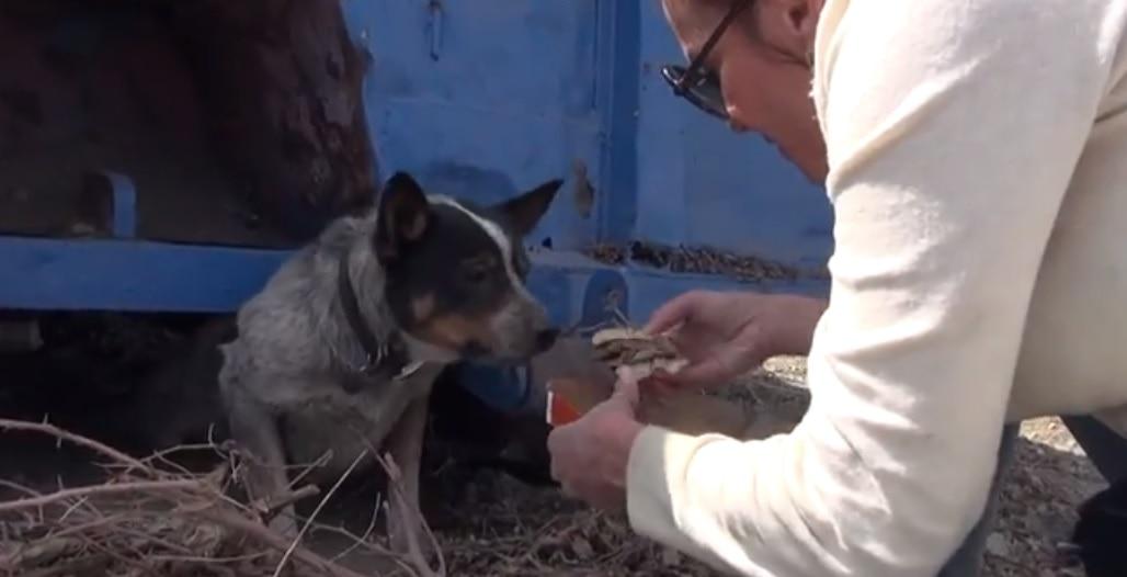 Dog Rescued After Living for 11 Months Under Dumpster