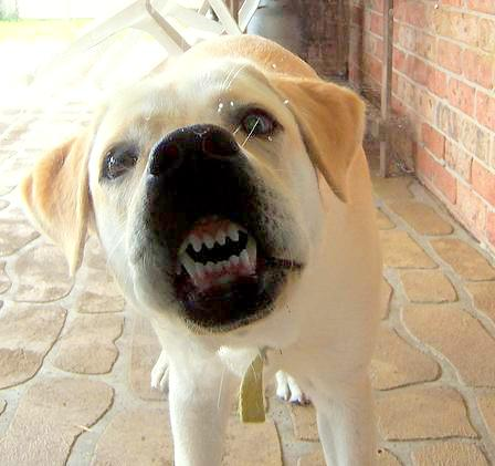 Goofiest Photos Of Dogs With Their Faces Squashed Against