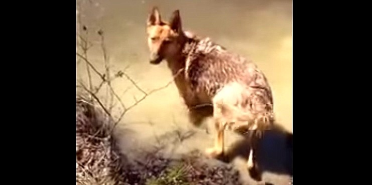 Dog Throws Tantrum When It's Time to Stop Swimming