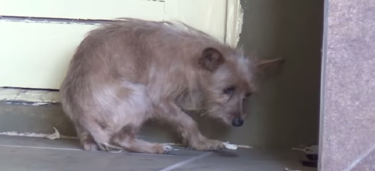Hope for Paws Rescues Terrified Abandoned Dog
