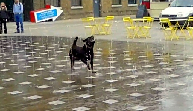 Dog Has a Blast Dancing in a Fountain